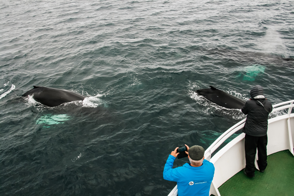 Whale watching on board Ölver.