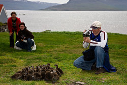 The birdlife in Vigur is exceptionally rich with a large population of eider duck and puffins, for example.