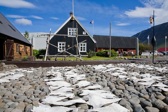 The Westfjords Heritage Museum. At the museum fish is salted and dried by the same methods used for hundreds of years. Next door you will find a wonderful fish restaurant.