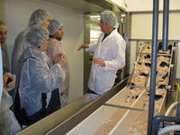 Fish processing explained to visitors at the Su�ureyri freezing plant.