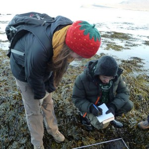 Field work on the beach for the course Coastal and Marine Ecology. Photo: Anja Bock.